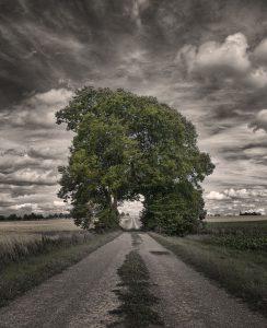 boom-weg